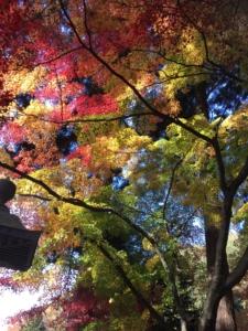 若穂 清水寺(せいすいじ)の紅葉